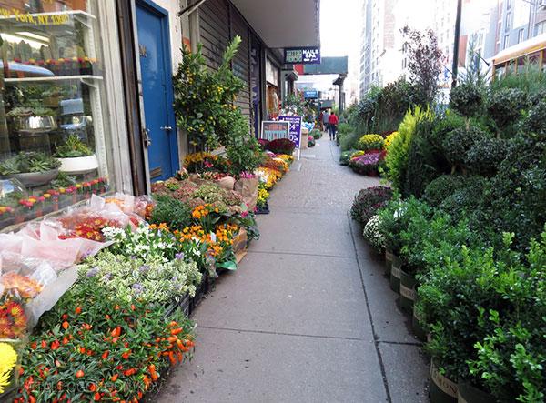 Flower-District